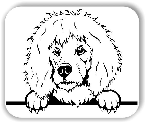 Wandtattoos Tiere - Hunde - Pudel - ohne Rassename