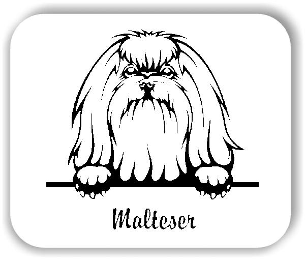 Wandtattoos Tiere - Hunde - Malteser Variante 3