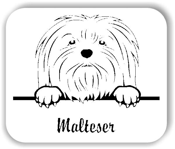 Wandtattoos Tiere - Hunde - Malteser Variante 1